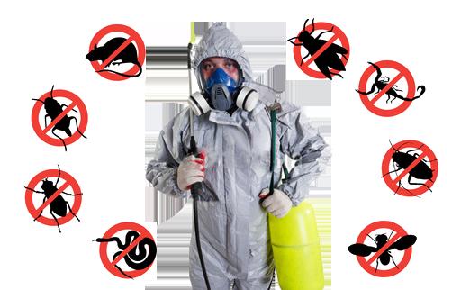 servicii-dezinsectie-deratizare-dezinfectie